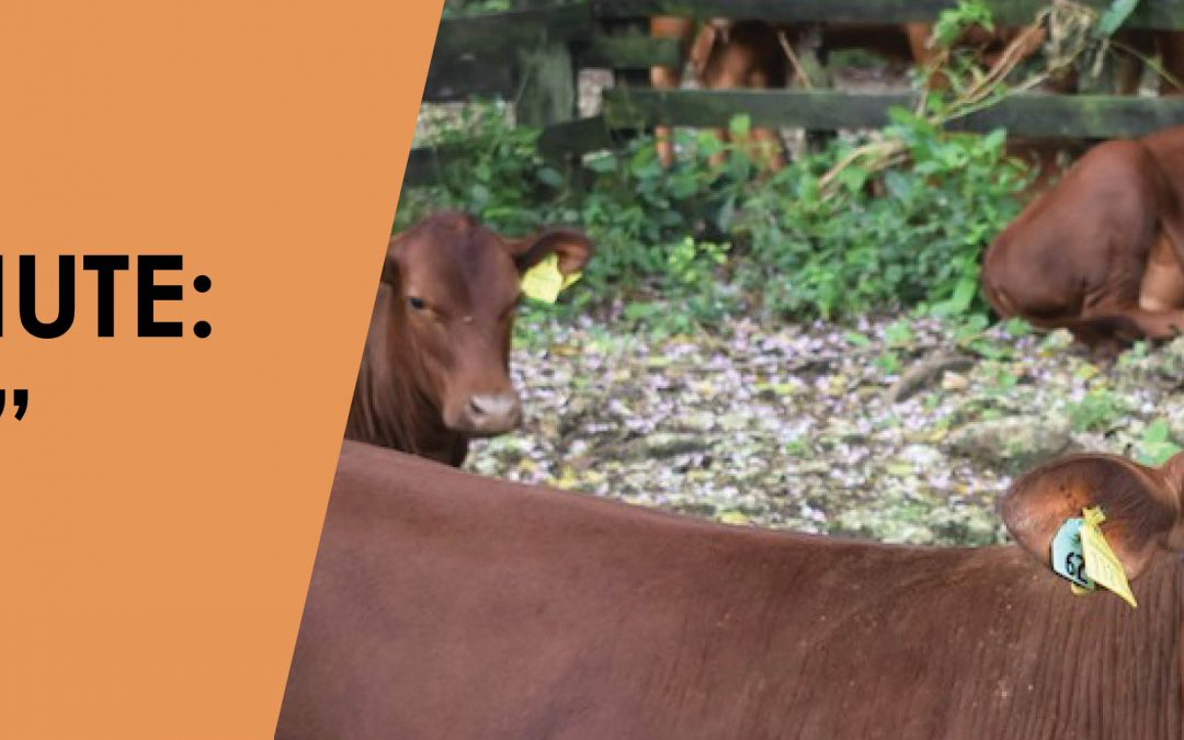 Marla's Minute — Holy Cow!